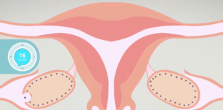 Ovulation et cycle menstruel